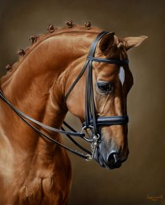 1 million+ Stunning Free Images to Use Anywhere Pretty Horses, Horse Love, Beautiful Horses, Animals Beautiful, Horse Photos, Horse Pictures, Horse Drawings, Animal Drawings, Horse Artwork