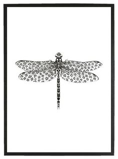 SWART Poster Leo the Dragonfly