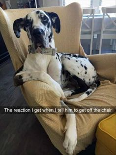 19 Funny Animal Pictures for Today If You'd like, click the link to see more like this: http://dummiesoftheyear.com/19-funny-animal-pictures-for-today/