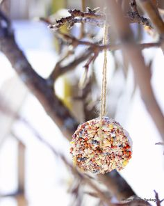 Make birdseed ornaments with the kids!