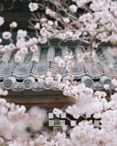 Kyoto    가장 일본다운 난젠지의 봄    #Kyoto #Japan #Sakura #일본 #봄 #교토 #벚꽃 #일본여행 #난젠지