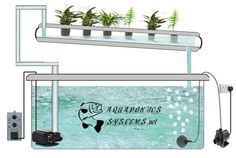 What are hydroponic systems : advantages, inconvenients? Hydroponic Systems Type http://www.aquaponicssystems.net/aquaponics-systems-basics/hydroponics/hydroponic-systems