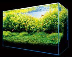 Takashi Amano Planted Tanks