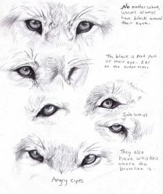 Wolf eyes from different angles