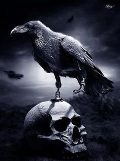 And still the Raven, never flitting, Still is sitting, still is sitting… ~Edgar…
