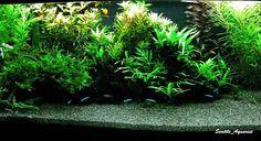 AquariumPlants.Com 's Substrate?