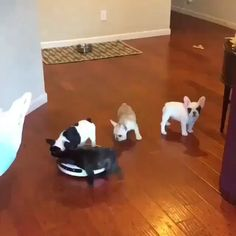 Funny Cats & Dogs Compilation & Tips Super Cute Puppies, Cute Baby Dogs, Cute Funny Dogs, Funny Cats And Dogs, Cute Dogs And Puppies, Cute Funny Animals, Doggies, Baby Animals Pictures, Cute Animal Pictures