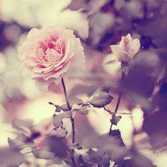 Resultado de imagem para we heart it flowers