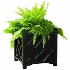 put at corner of square boxwood hedges in backyard, plant round hedge ball inside: DMC Products Chippendale Square Solid Wood Planter   Amazon