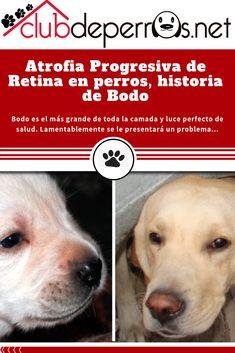 Precious Mascotas Perro silueta bienvenido a nuestro hogar Colgante Signo 30 X Razas