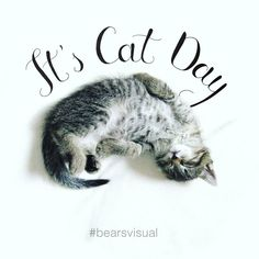 March 1st is not only the first day of spring , but also the cats day! So, don't forget to buy a small present for your lovely furry friend  #bearsvisual #nationalcatday #lettering #design #meow #visualcommunications #bearslovecats #firstdayofspring