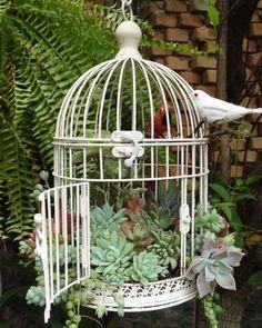 Succulent Gardening, Planting Succulents, Container Gardening, Organic Gardening, Garden Planters, Diy Planters, Succulent Plants, Vegetable Gardening, Succulent Containers