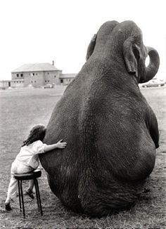 Theirs something about elephants..