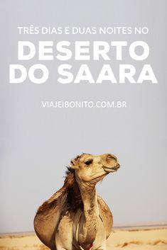 Como ir ao Deserto do Saara, no Marrocos. Quanto custa ir ao Deserto do Saara. Gordes du Todra, Merzouga. Dromedários, tapetes marroquinos, tajine de frango e muito mais.