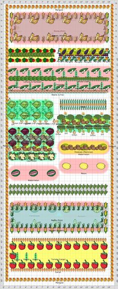 """2014 Companion garden including 2 """"Three Sisters"""" sections of corn, pole beans and squash/pumpkins""""."""