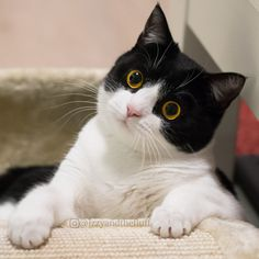 Now look - are you getting out of bed today ? Cute Cats And Kittens, I Love Cats, Crazy Cats, Cool Cats, Baby Animals, Funny Animals, Cute Animals, Beautiful Cat Breeds, Beautiful Cats