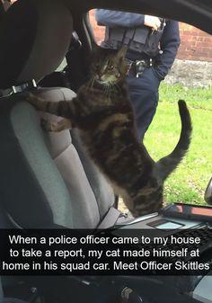 #funny #cats #photos