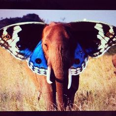 Such a beautiful #elephantinspiration