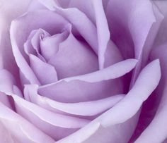 My late husband wooed me by sending me a dozen roses every week for about three month.Each week a different color. Included different shades of pink, white, red and lavender. The lavender ones were amazing.