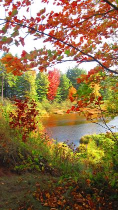 Madeline Island, Wisconsin -- such beautiful beaches! Nature Pictures, Beautiful Pictures, Van Gogh Drawings, Autumn Scenes, Beautiful Beaches, Beautiful World, Wisconsin, Scenery, Island