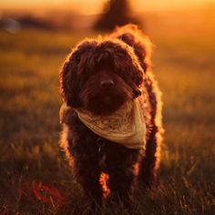 Going for a walk with you at sunset - lovely dog