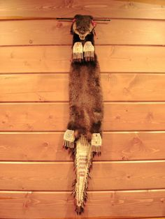 otter skin bag   This is a Otter Medicine/Pipe Bag. A cased otter pelt and skull to ...