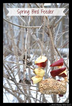 Craft Ideas for Kids: Spring Bird Feeder