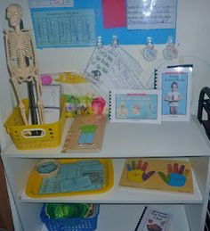 Great Human Body Shelf Ideas!