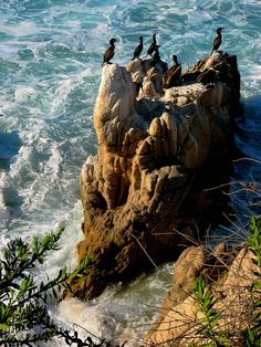 Cormorants on a sea rock, Baja California Sur, Mexico (by Ani Carrington).