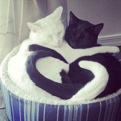 :) i love black & white