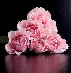 Imagen Hermosas...flores. - grupos.emagister.com
