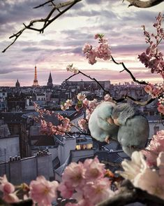 Paris via : marcel_van_luit on IG. Love Birds, Beautiful Birds, Beautiful Places, Wonderful Places, Beautiful Pictures, France Photos, Paris Photos, Europe Photos, Best Vacation Destinations