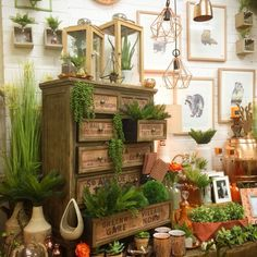 Image result for visual display garden center
