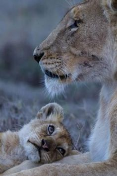 Le regard du petit sur sa mère qui veille....