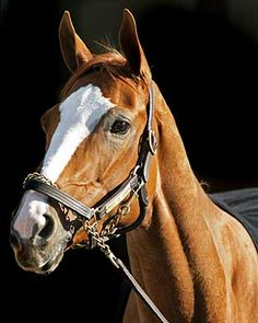 Rags To Riches- this filly won the Belmont Stakes in 2007, becoming only the third female to do so in the race's long history.