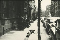Saul Leiter Perry Street Cat, New York City c.1949
