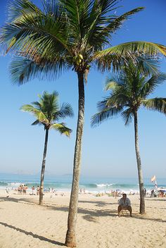 Coconuts tree on the beach,  Ipanema, Rio de Janeiro, Brazil