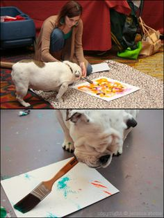 The one-eyed artist dog!  Rescue team found one-eyed bulldog named Piper in Texas. Artist Jessica Stone owned dog. Piper love watching owner when she paints.. Jessica Stone left paint and brush in front of Piper one day. Piper painted good paintings, even had fans. Piper's paintings very best price are sold! Proceeds from the paintings, used for rescue team volunteers saved Piper..