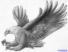 how to sketch an eagle in pencil, draw an eagle bird step 10