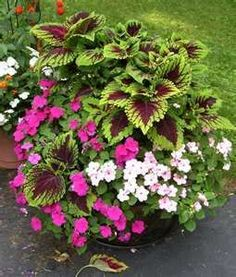 Impatiens and Coleus are always lovely together.