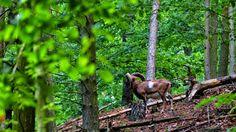 GREAT HUNTING: Myslivecké fotografie zvěře a přírody. Léto. Muflo...