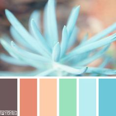 Nature inspires us in all sorts of ways. We look to nature for design and color inspiration. Nature has an amazing way of combining colors that are harmonious and pleasing to the eye. In this Trend Letter we developed our color palettes from nature. The latest trends and style inspiration from us to you .. Friend …