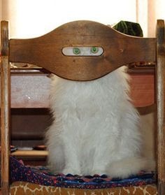 Ninja Kitteh on stake-out Cute Cats, Funny Cats, Funny Animals, Cute Animals, Animal Fun, Baby Animals, Crazy Cat Lady, Crazy Cats, Tierischer Humor