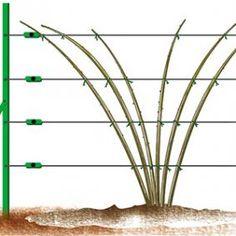 Schiebefächer - I. Französisch - Rustica - Another! Garden Art, Garden Design, Home And Garden, Garden Ideas, Horticulture, What Is Health, Garden Online, Medicinal Herbs, Plantation
