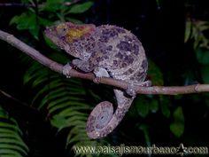 Expedición botánica de Ignacio Solano y el equipo de Paisajismo Urbano a Madagascar