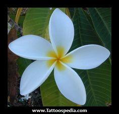 Jasmine Tattoo Flowers