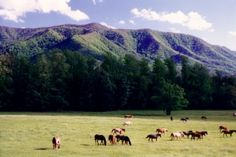 Cades Cove in The Great Smoky Mountains, TN. I visited here when I was a little one. Want to go back someday.