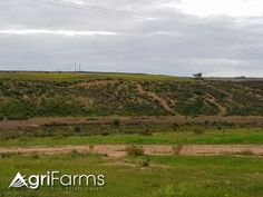 This wheat and tea farm in the Swartland district has its own private route. It has 3 titles which could be sold separately if desired. The farm h. Farm H, Livestock, West Coast, Country Roads, Tea, Plants, Outdoor, Outdoors, Plant