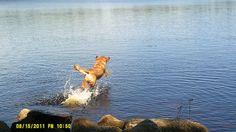 Isys goes Diving Long Lake, Lake Park, Nova Scotia, Diving, Adventure, Animals, Scuba Diving, Animaux, Animal