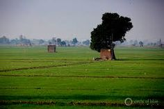 Image result for punjab fields